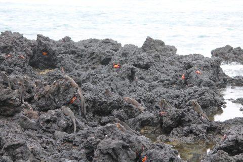 Galapagos! Juhuuu! Det er lige mig! :0)