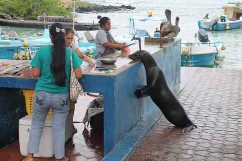 San Cristobal – wow!