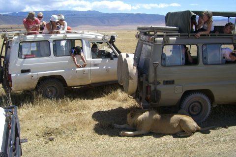 Safari og hotpools