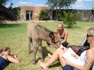 Dyrehjem i Afrika