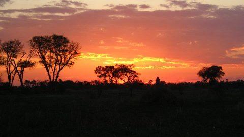 Magi i Sydafrika
