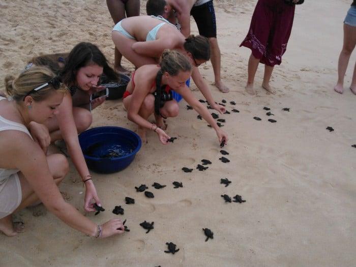 skildpadder i Sri Lanka