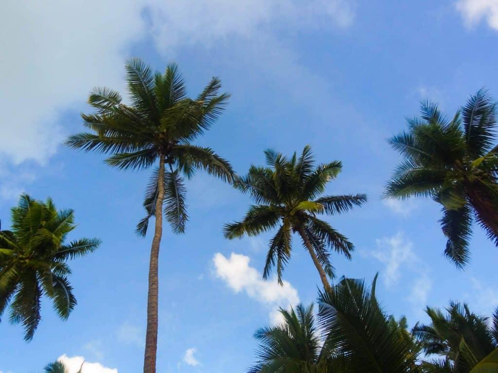 Dating tjenester palm ørken ca