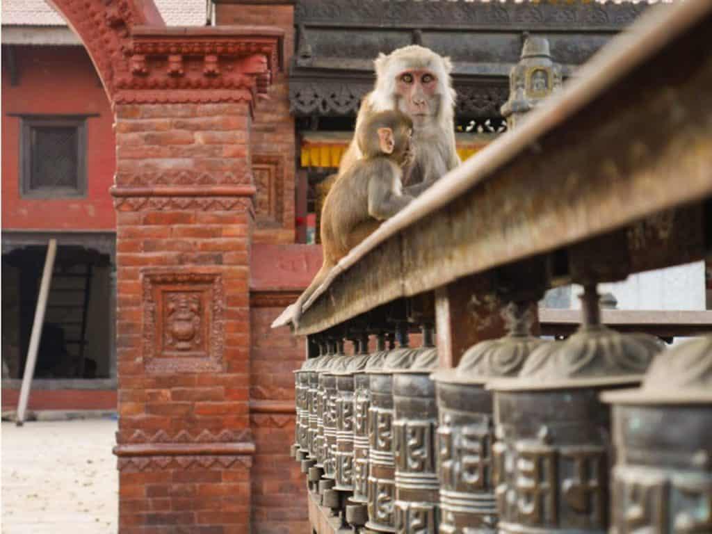 Dyreliv i Nepal