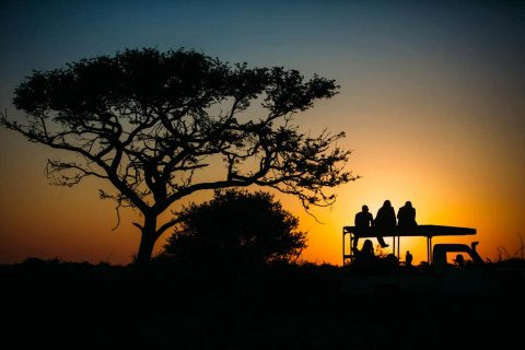 Sydlige Afrika & Dyreprojekter